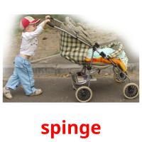 spinge picture flashcards