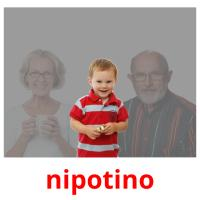 nipotino picture flashcards