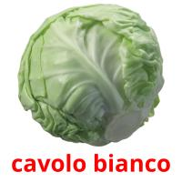cavolo bianco picture flashcards