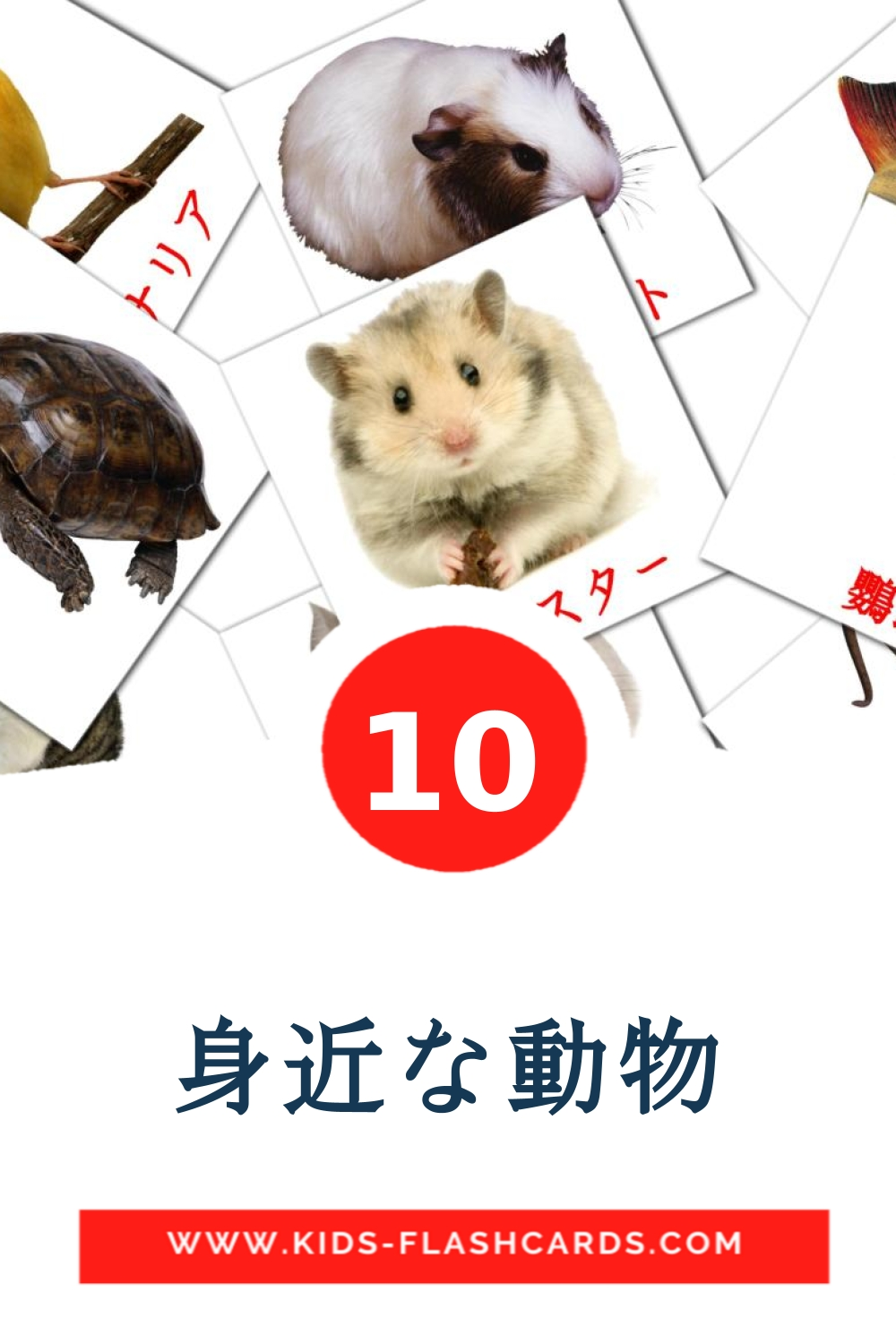 10 身近な動物 Picture Cards for Kindergarden in japanese