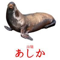 あしか picture flashcards