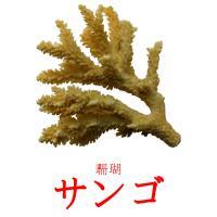 サンゴ picture flashcards