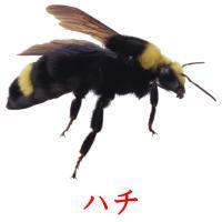 ハチ picture flashcards