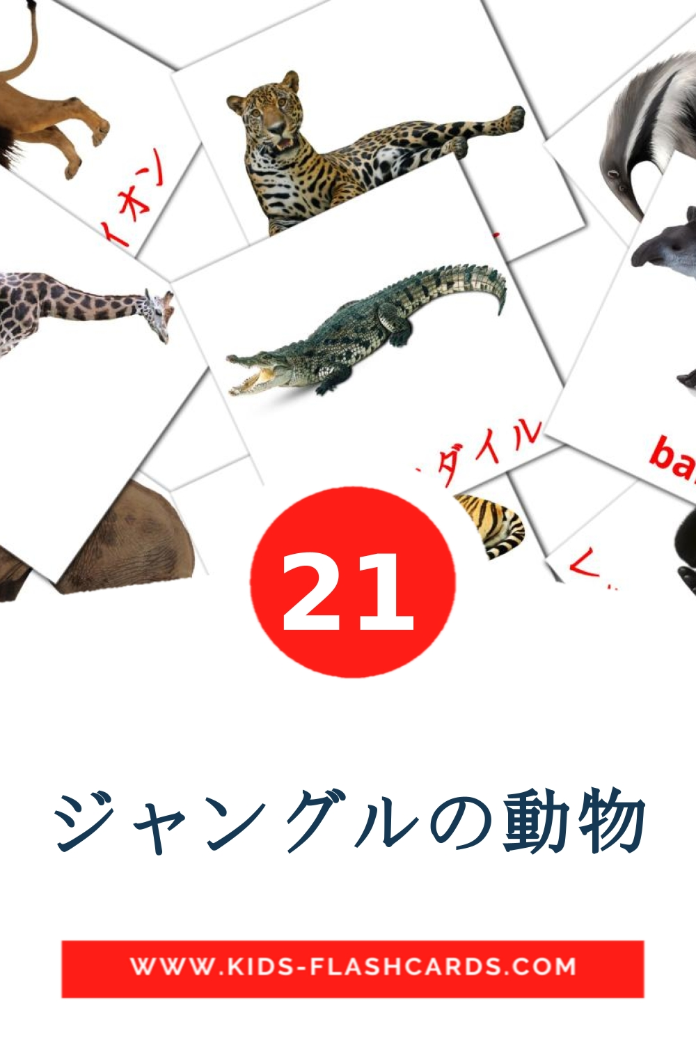21 ジャングルの動物 Picture Cards for Kindergarden in japanese