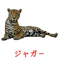 ジャガー picture flashcards
