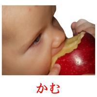 かむ picture flashcards