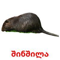 შინშილა picture flashcards