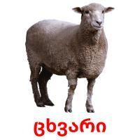 ცხვარი picture flashcards