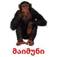 მაიმუნი picture flashcards