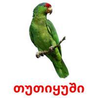 თუთიყუში picture flashcards