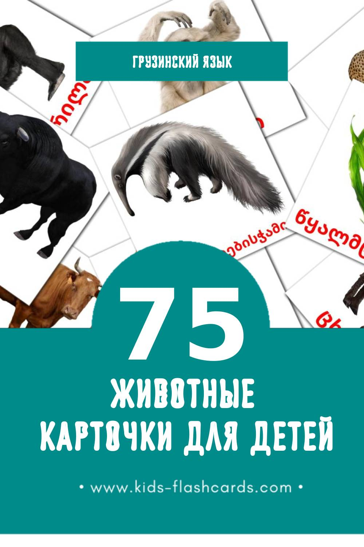 """""""ცხოველები"""" - Визуальный Грузинском Словарь для Малышей (46 картинок)"""