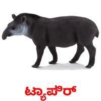 ಟ್ಯಾಪಿರ್ picture flashcards