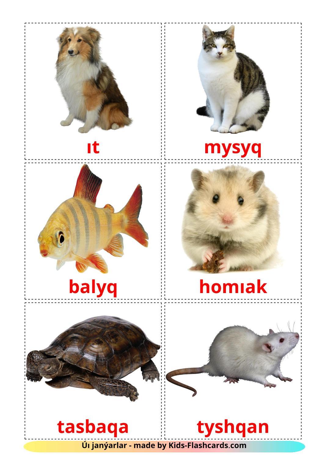Domestic animals - 10 Free Printable kazakh(latin) Flashcards