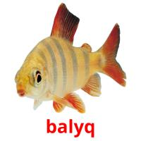 balyq picture flashcards
