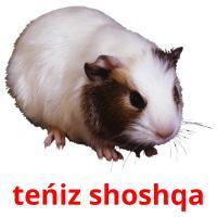 teńіz shoshqa picture flashcards
