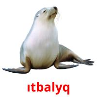 ıtbalyq picture flashcards