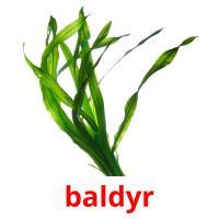 baldyr picture flashcards