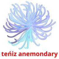 teńіz anemondary picture flashcards