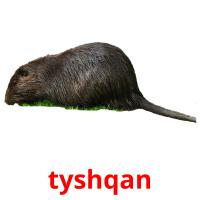 tyshqan picture flashcards