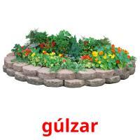 gúlzar picture flashcards