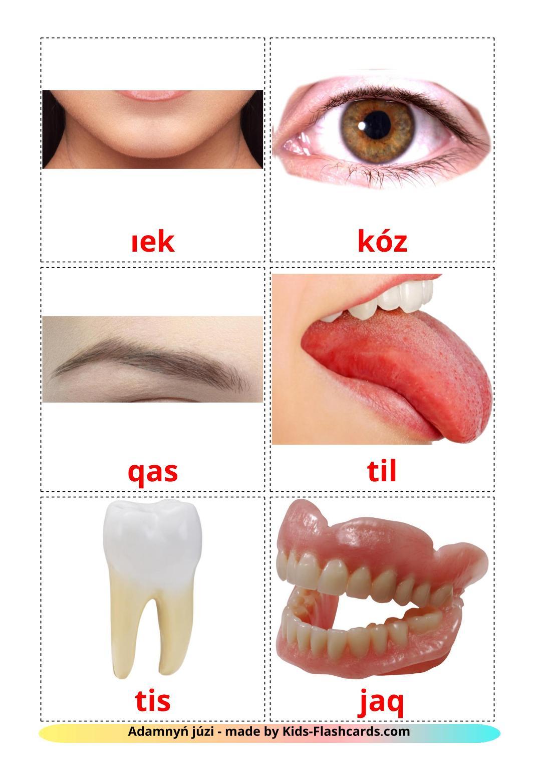 Face - 20 Free Printable kazakh(latin) Flashcards