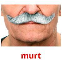 murt picture flashcards