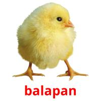 balapan picture flashcards
