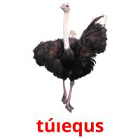 túıequs picture flashcards