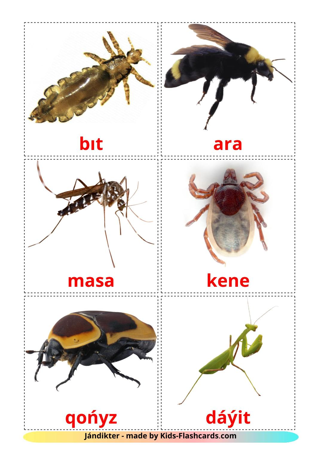Insects - 23 Free Printable kazakh(latin) Flashcards