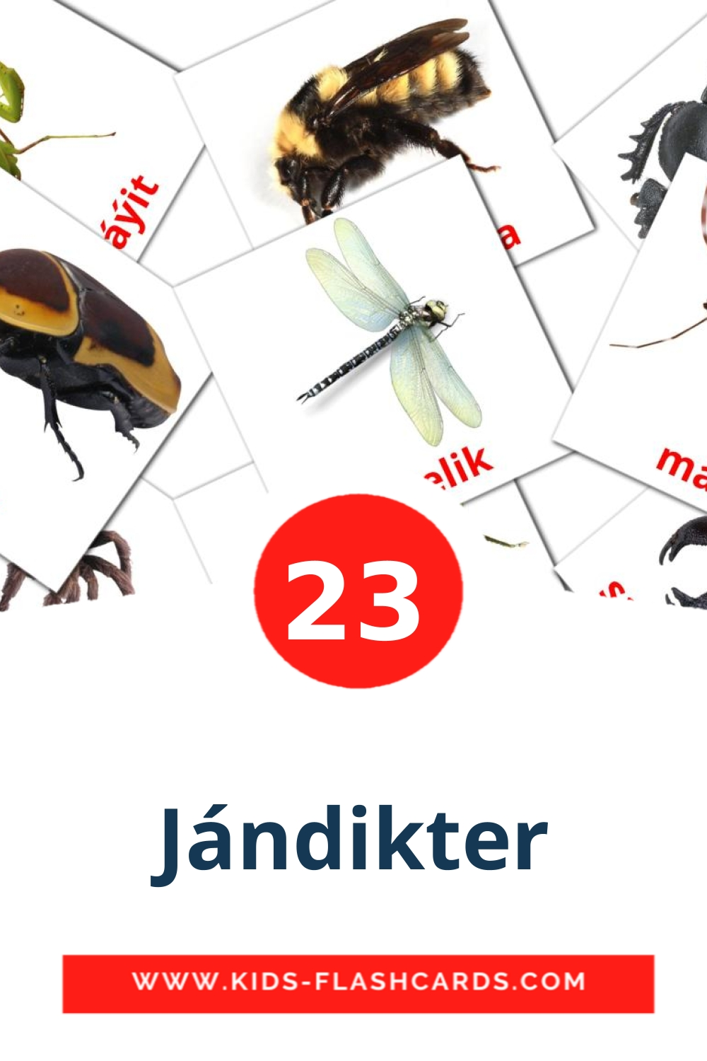 23 Jándіkter Picture Cards for Kindergarden in kazakh(latin)