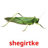 shegіrtke picture flashcards