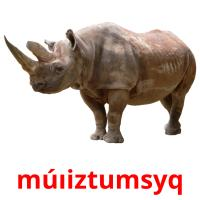 múıіztumsyq picture flashcards