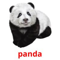 panda picture flashcards