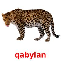 qabylan picture flashcards