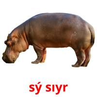 sý sıyr picture flashcards