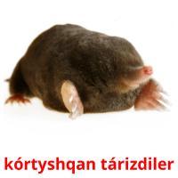 kórtyshqan tárіzdіler picture flashcards