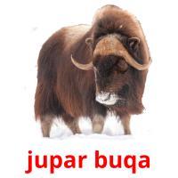 jupar buqa picture flashcards