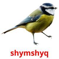 shymshyq picture flashcards