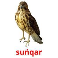 suńqar picture flashcards