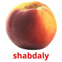 shabdaly picture flashcards