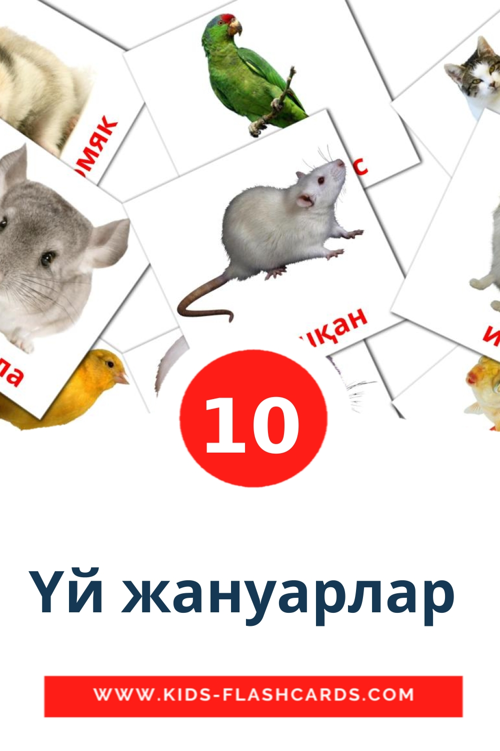 10 Үй жануарлар  Picture Cards for Kindergarden in kazakh