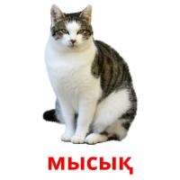 мысық picture flashcards