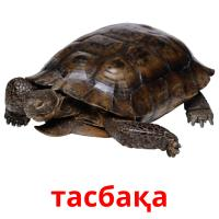 тасбақа picture flashcards