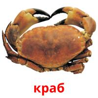 краб picture flashcards
