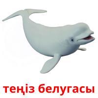 теңіз белугасы picture flashcards