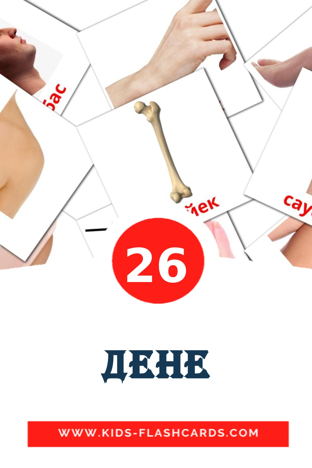 26 Дене Picture Cards for Kindergarden in kazakh