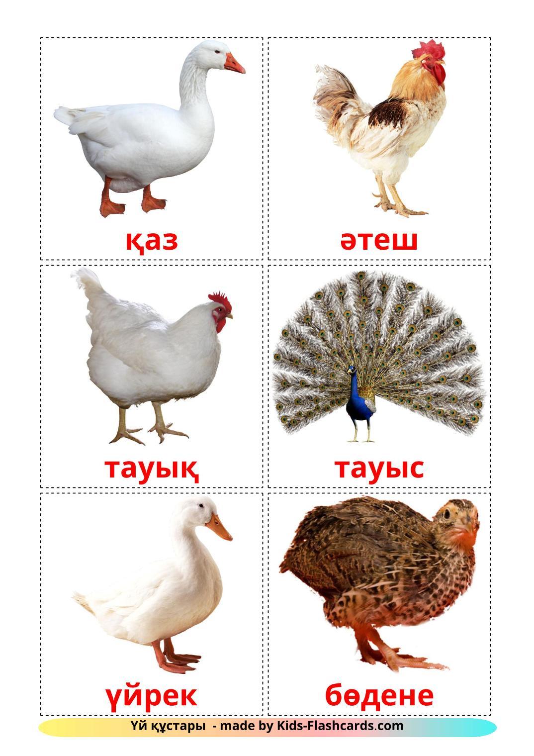 Farm birds - 11 Free Printable kazakh Flashcards