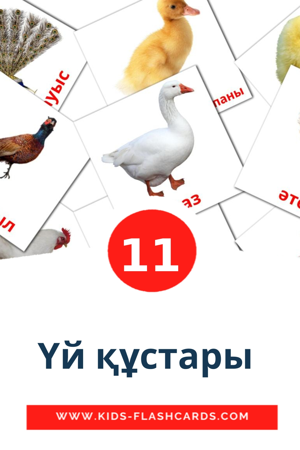 11 Үй құстары  Picture Cards for Kindergarden in kazakh