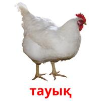 тауық picture flashcards