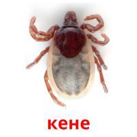кене picture flashcards